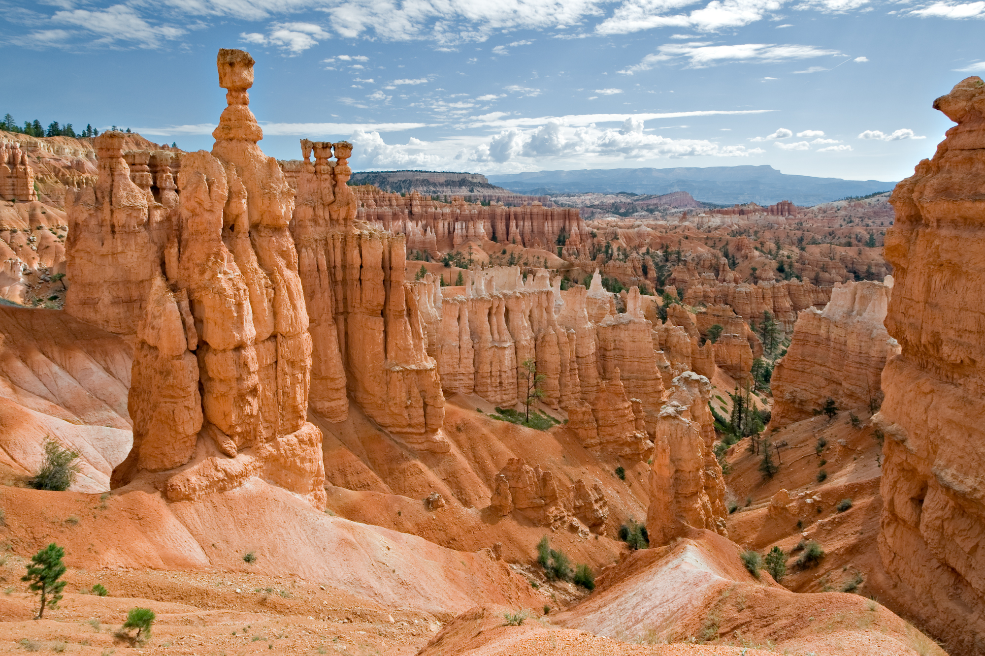 Hoodoos in Claron Formation, Bryce Canyon