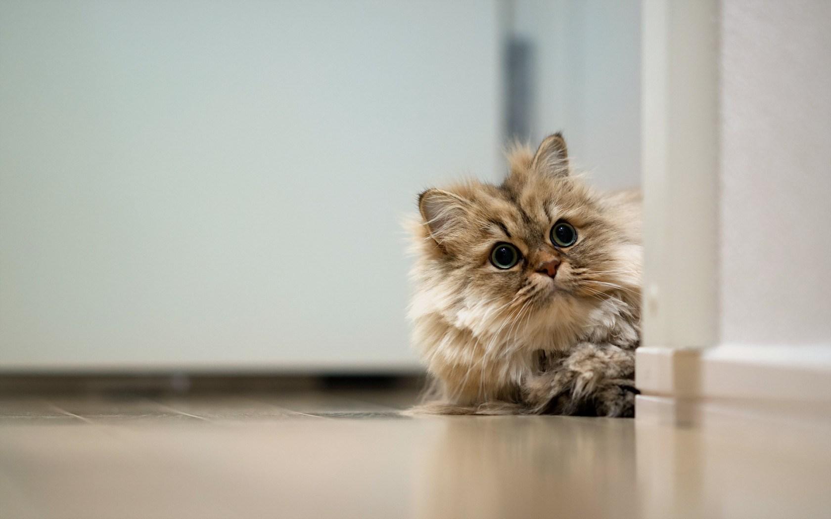 Cat Animal Floor