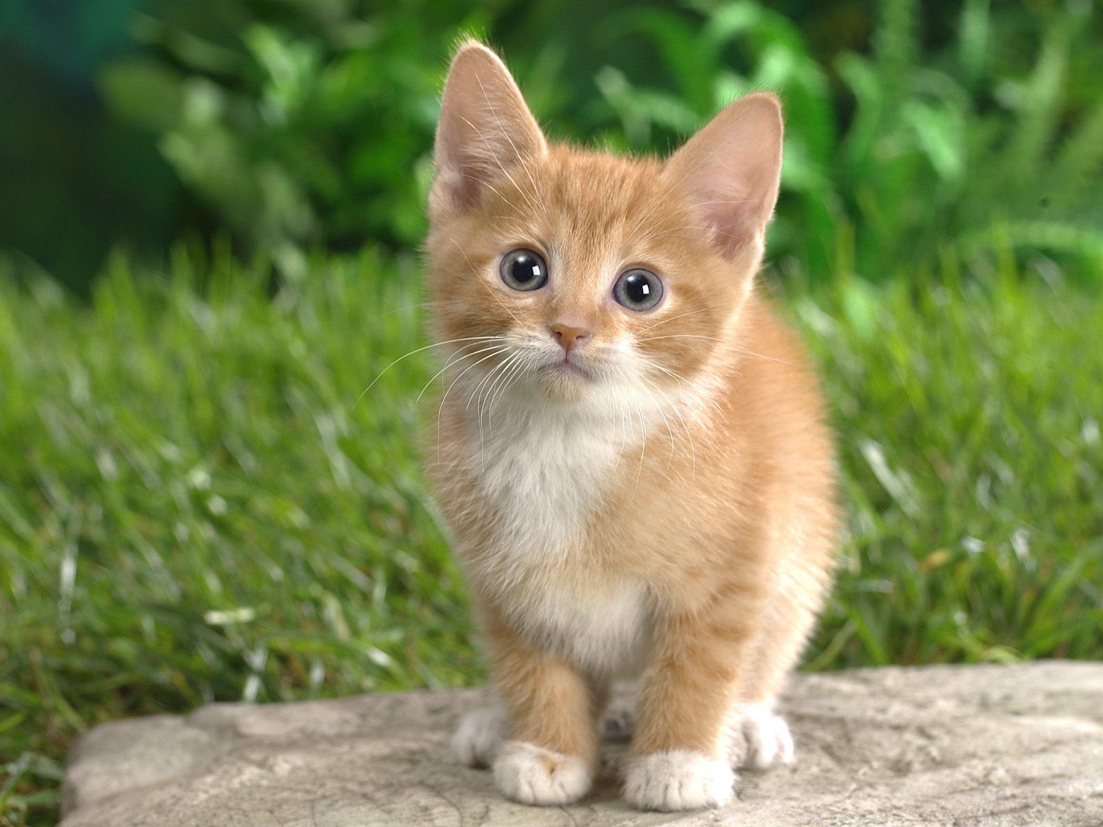 Cat Animal Photo
