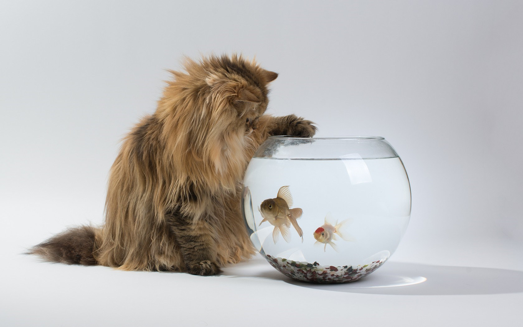 Cat Aquarium Fish