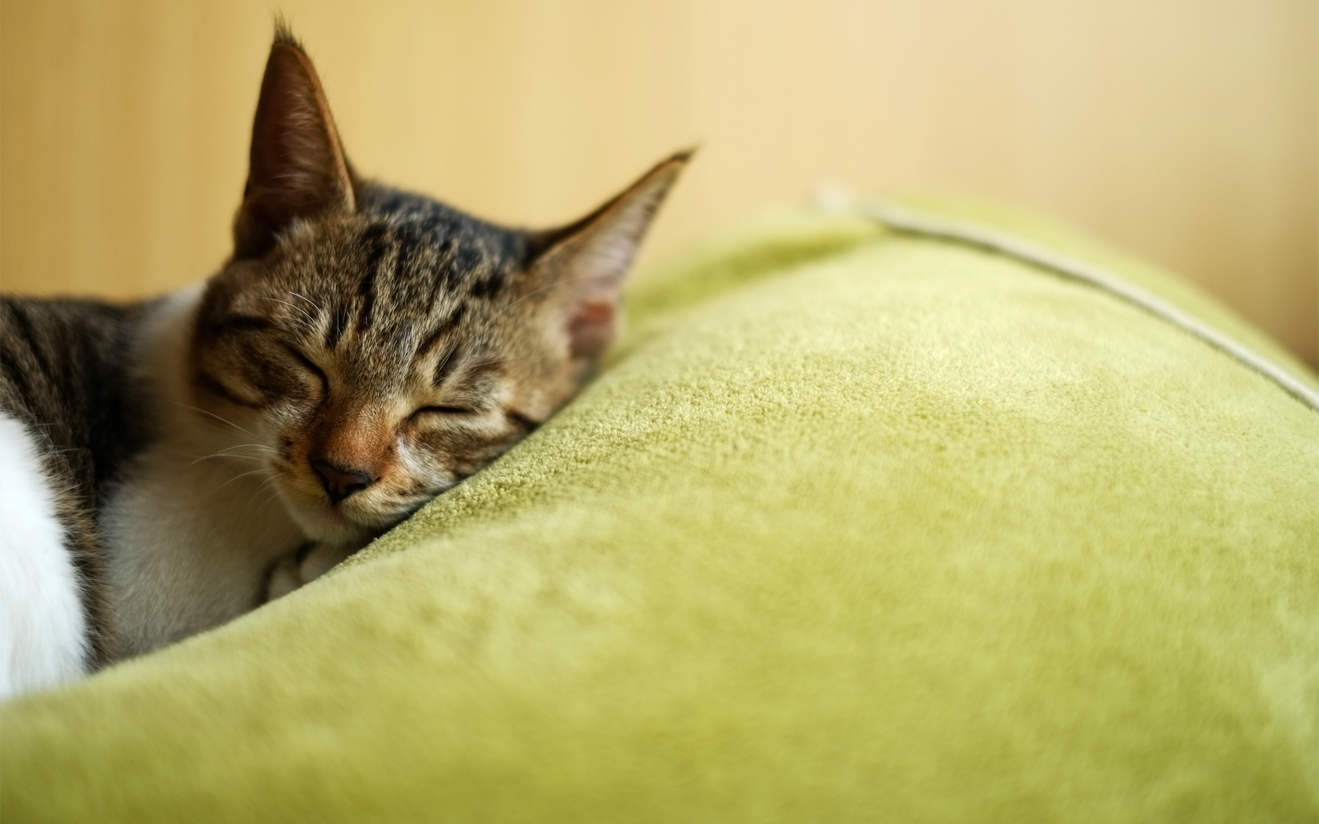 original wallpaper download: A beautiful tabby cat asleep - 1920x1200
