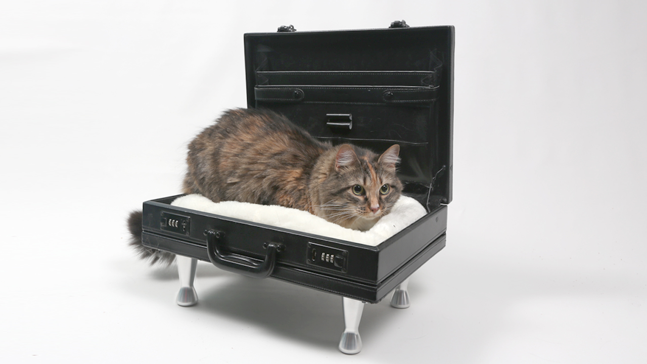 diy cat bed briefcase with Aeva