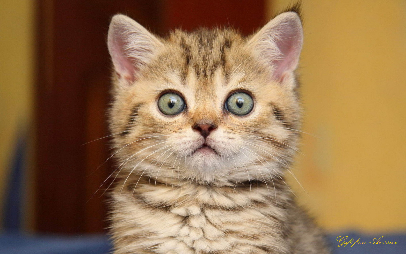 Cute Cat Big Eyes HD Wallpaper