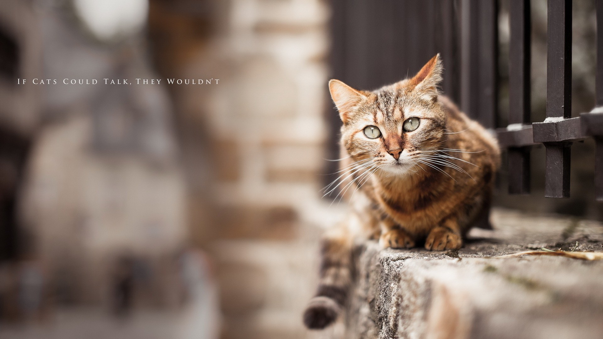 Cat Blur Photo HD Wallpaper