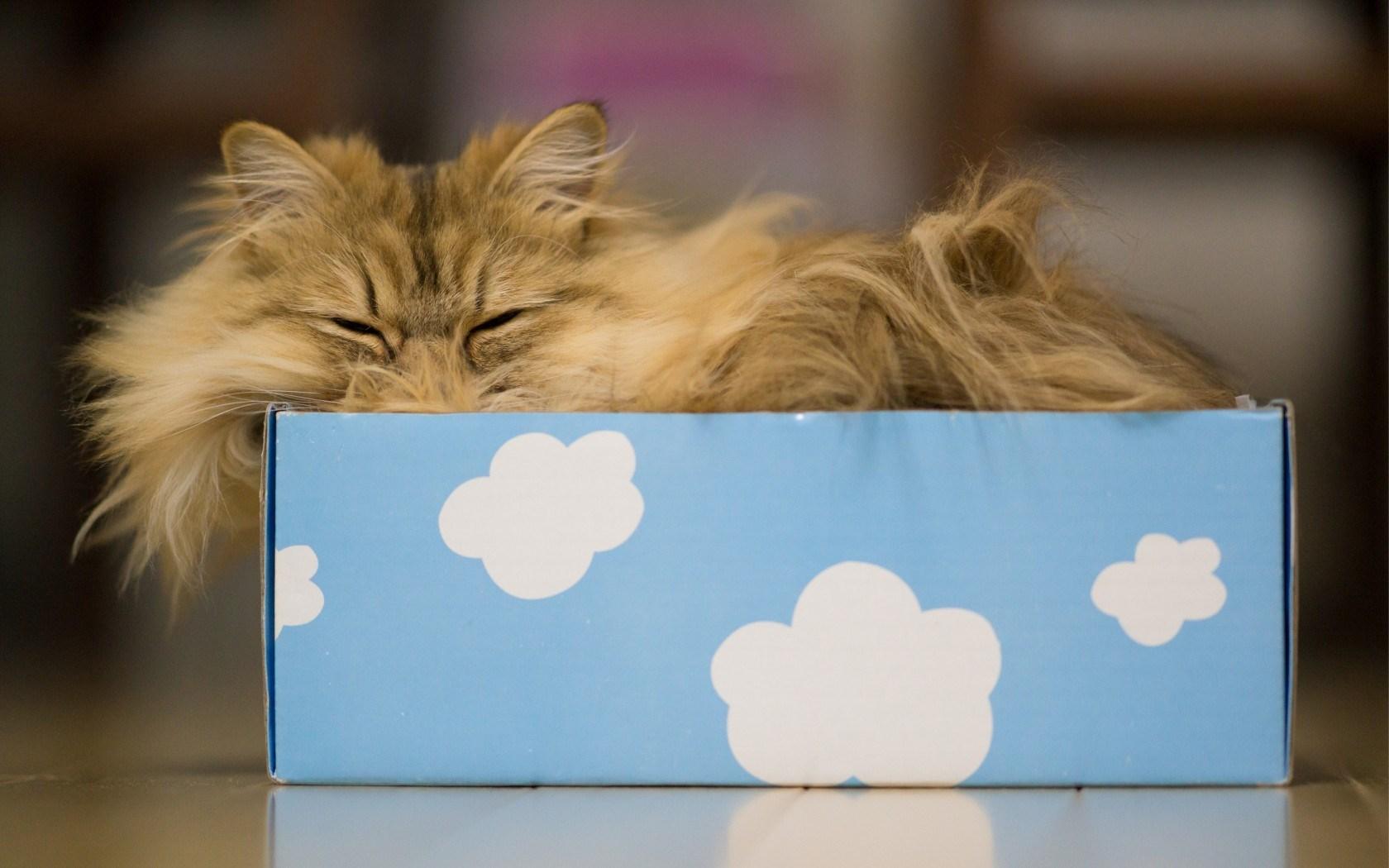 Cat Box Clouds Dreams