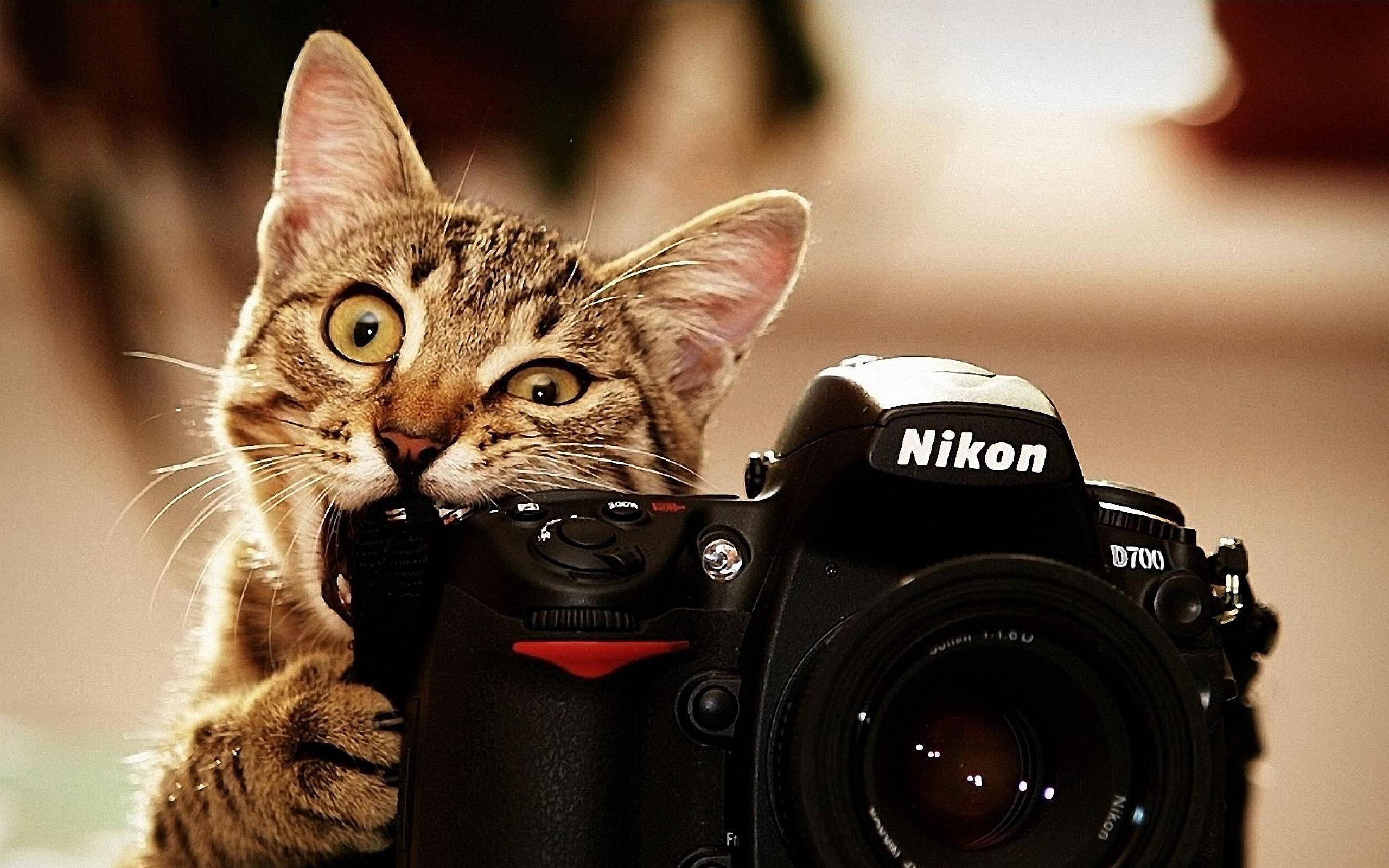 Cat Camera Funny