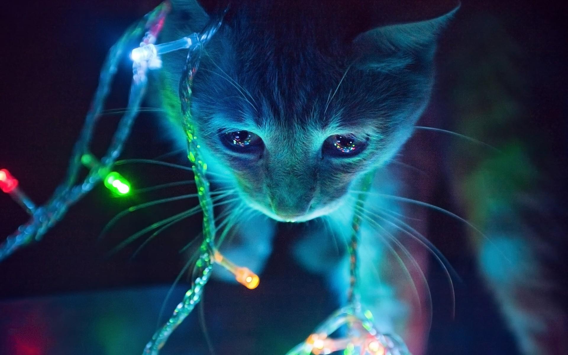Cat Christmas Lights ...