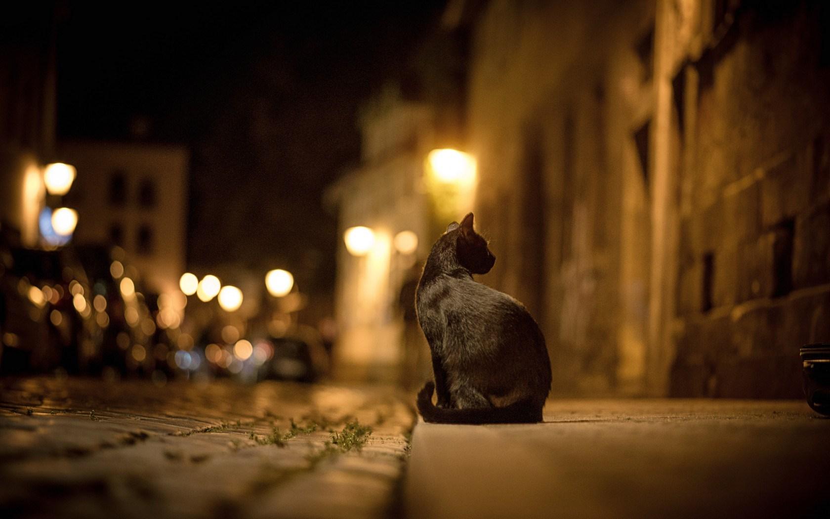 Cat City Street Night Lights