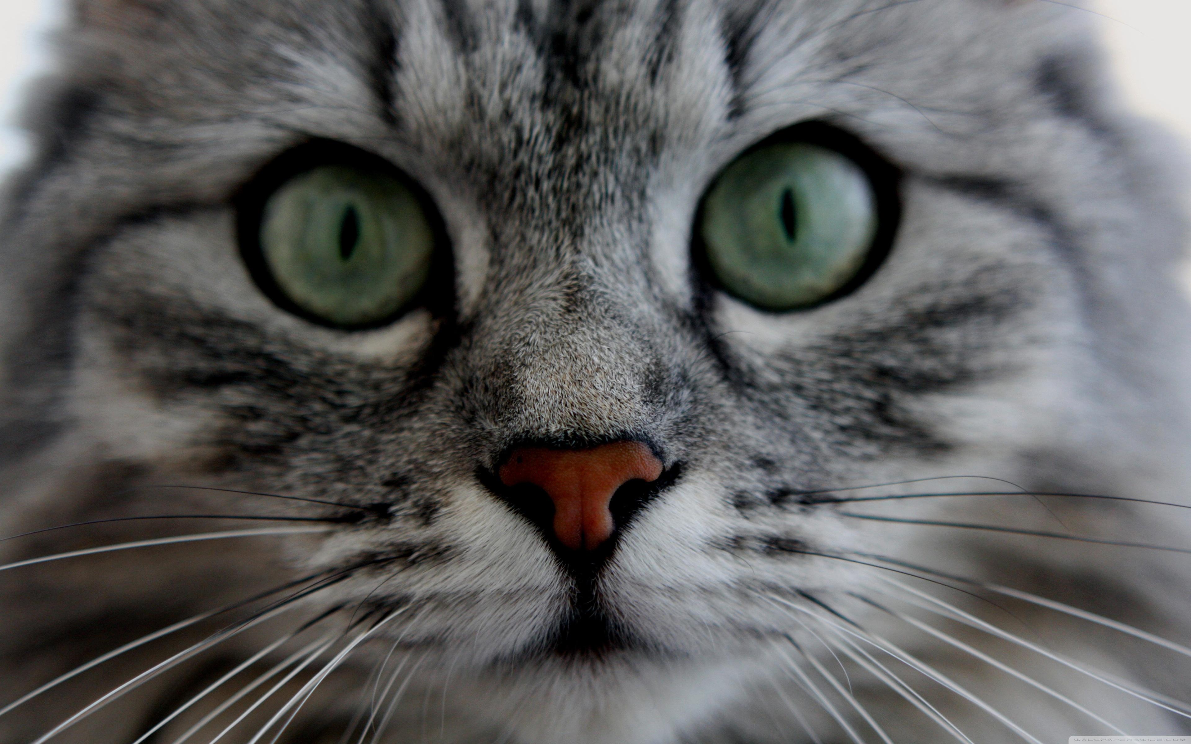 Cat Close Up Pictures