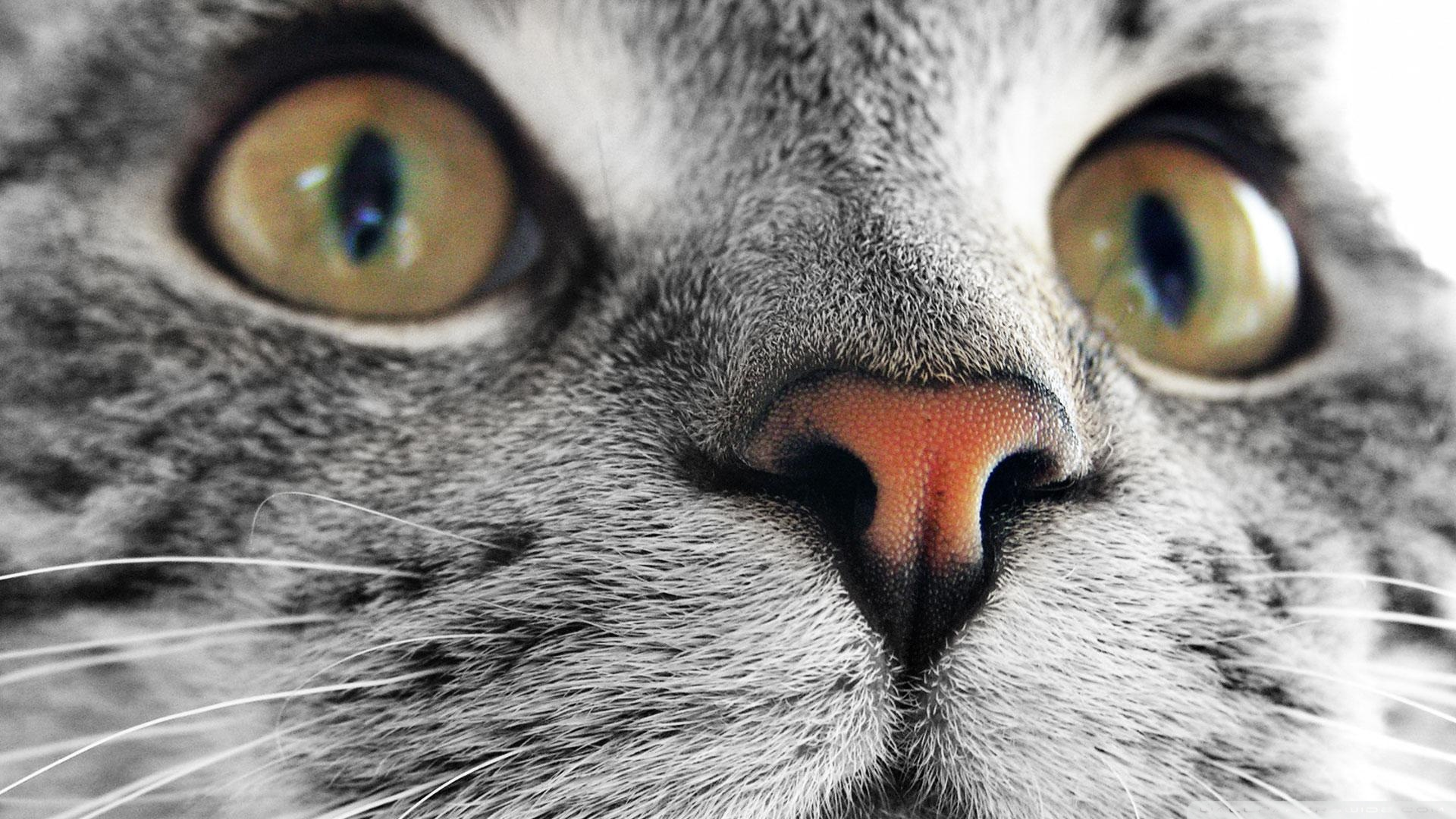 Cat Close Up Pictures
