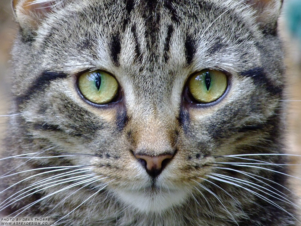 ... Close up photo of a really cute cat at Barby Keel animal sanctuary on one of