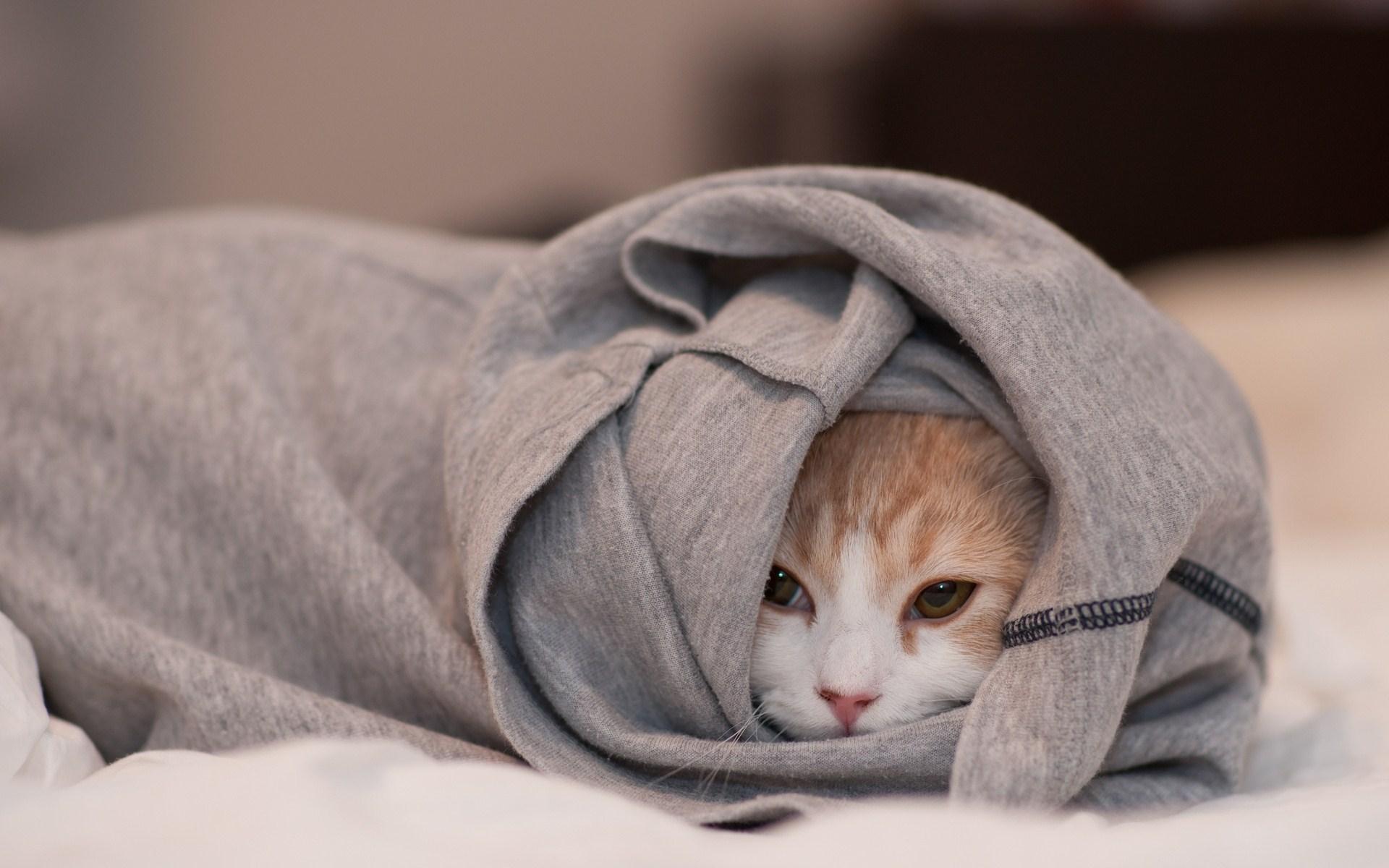 Cat Clothes Hidden Photo