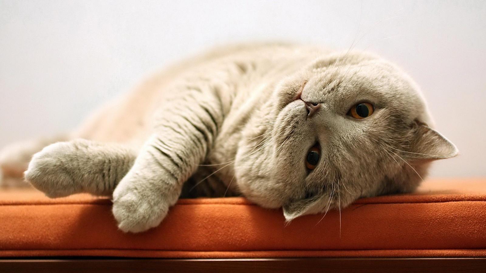 Cat Cuddle Ready