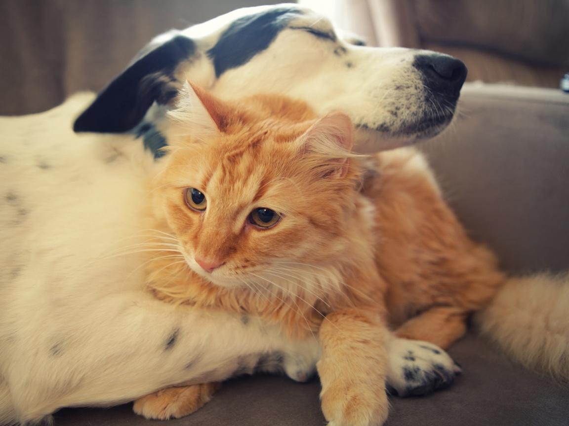 ... 1152x864 Cat dog hug Wallpaper ...