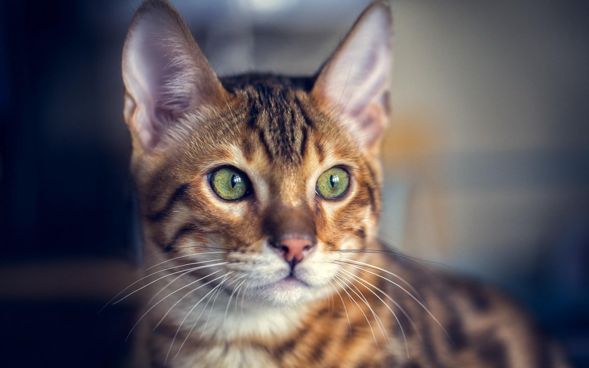 Cat Ears Eyes