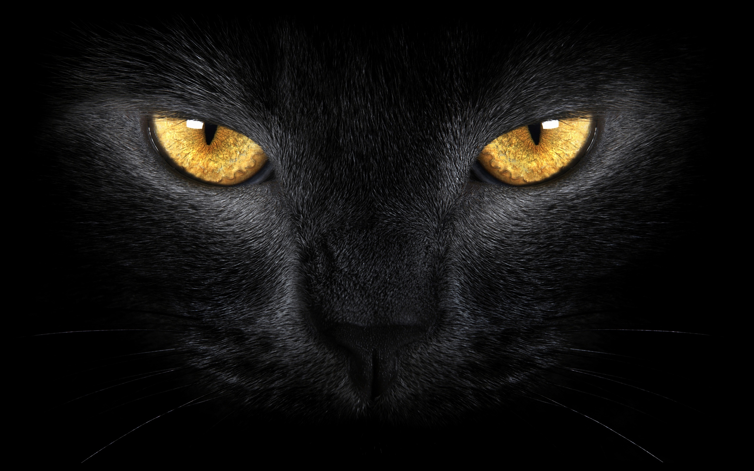 Black Cat Eyes Wallpaper: Cat Eyes Wallpaper