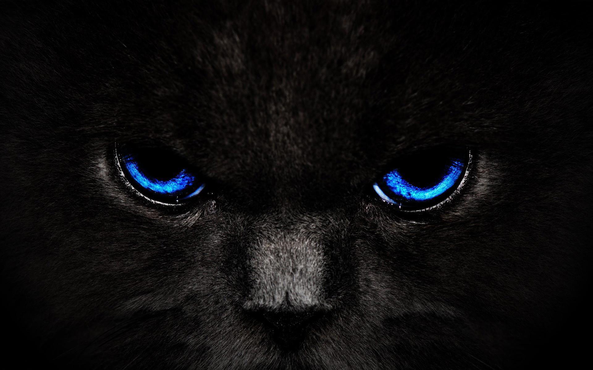 Cat eyes art