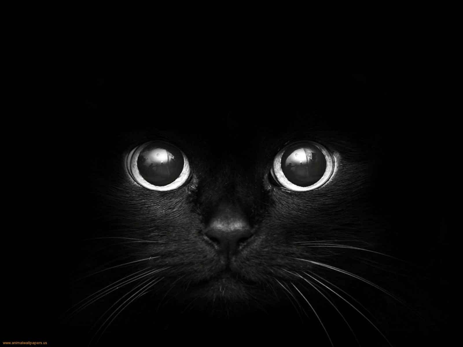 Cat Eyes HD Wallpaper 17 For Desktop Background