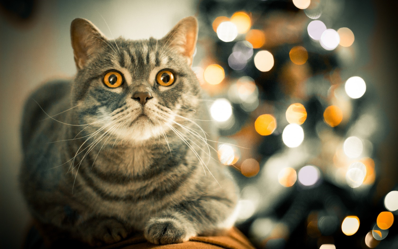 Cat Eyes Bokeh