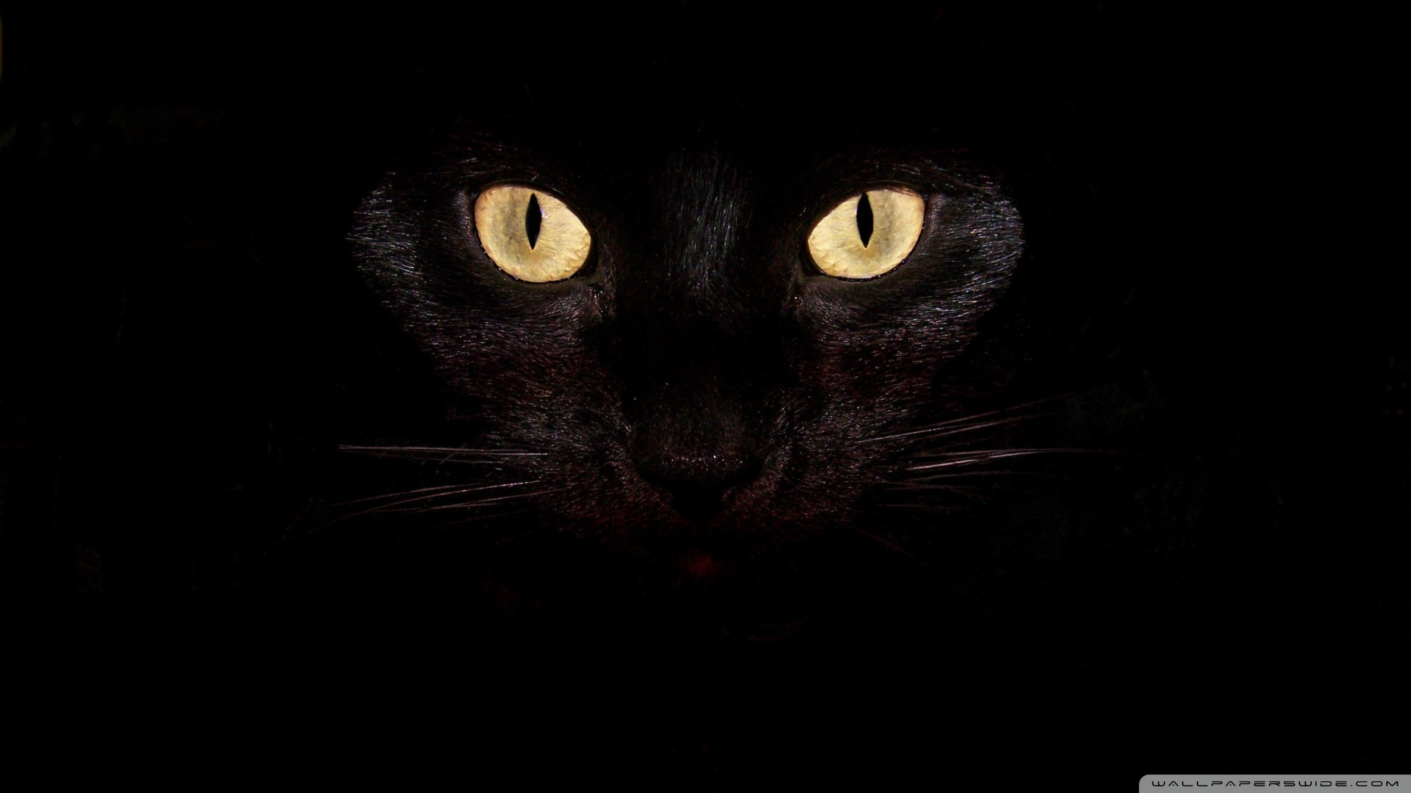 Black Cat Eyes Wallpaper: Horse HD Wallpaper