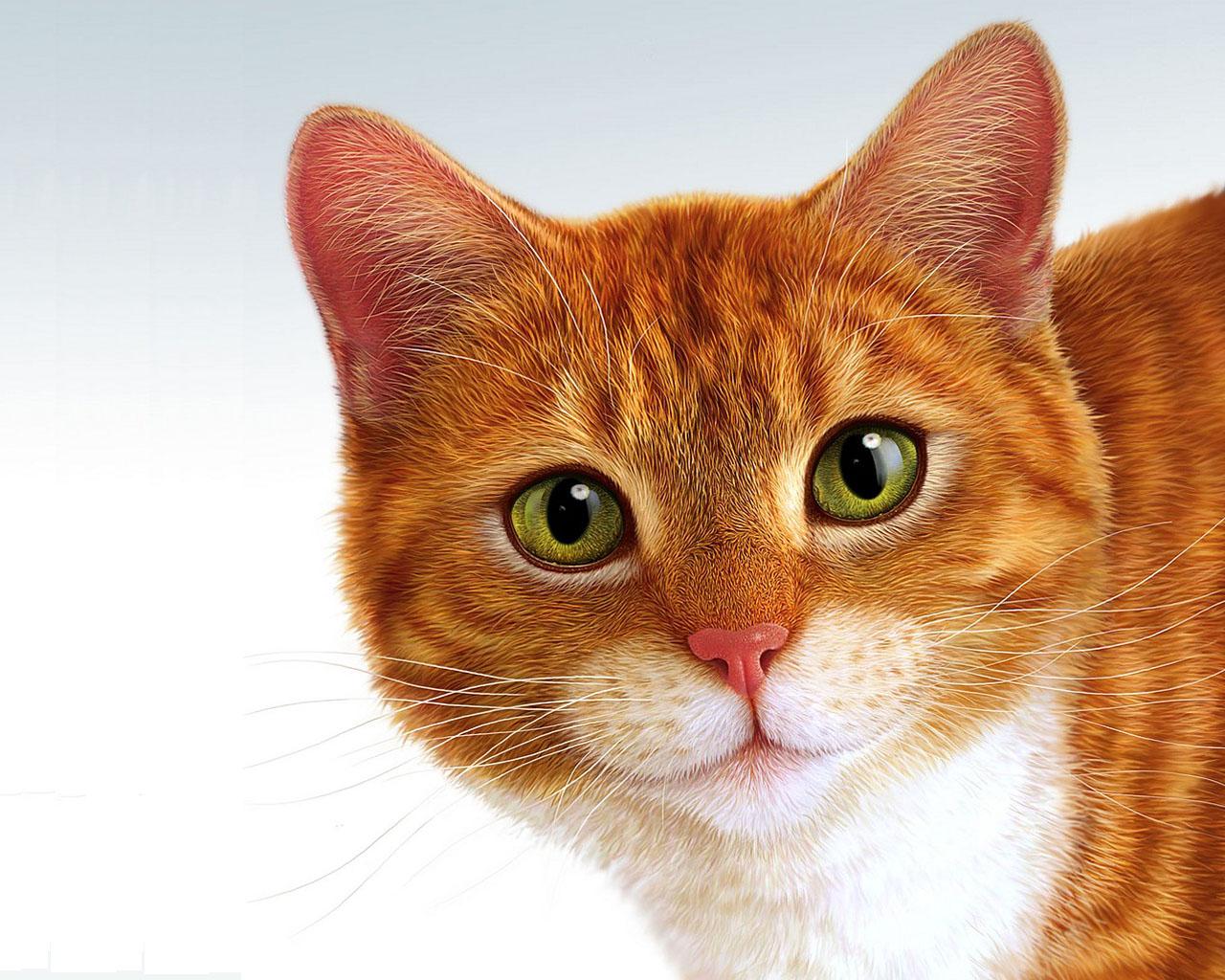 Apple Mac Cat Face Like Angel Soul