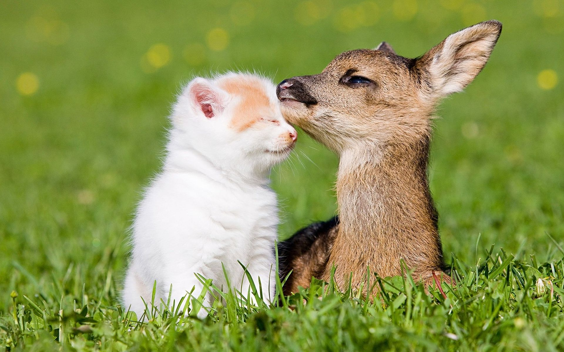 Cat Fawn Friendship