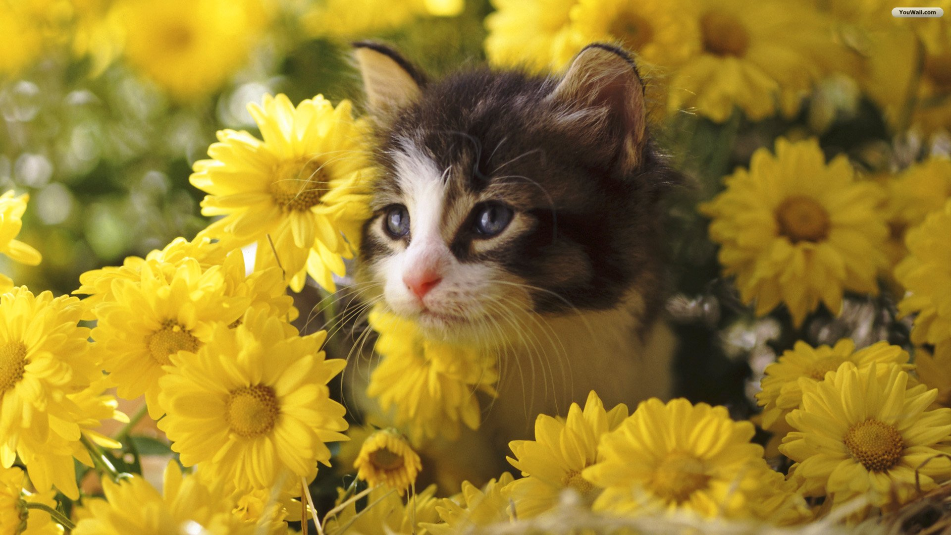 Cat and Flowers Wallpaper