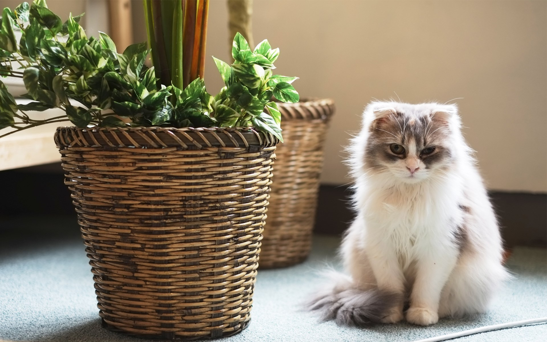 Cat Fluffy Pots Plant