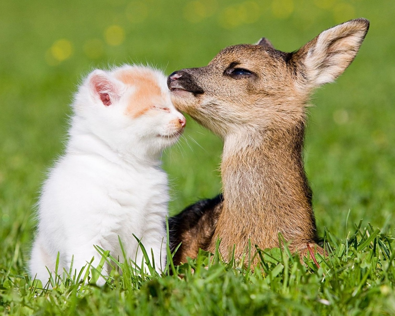 Cat Fawn Friendship Wallpaper in 1280x1024 5:4