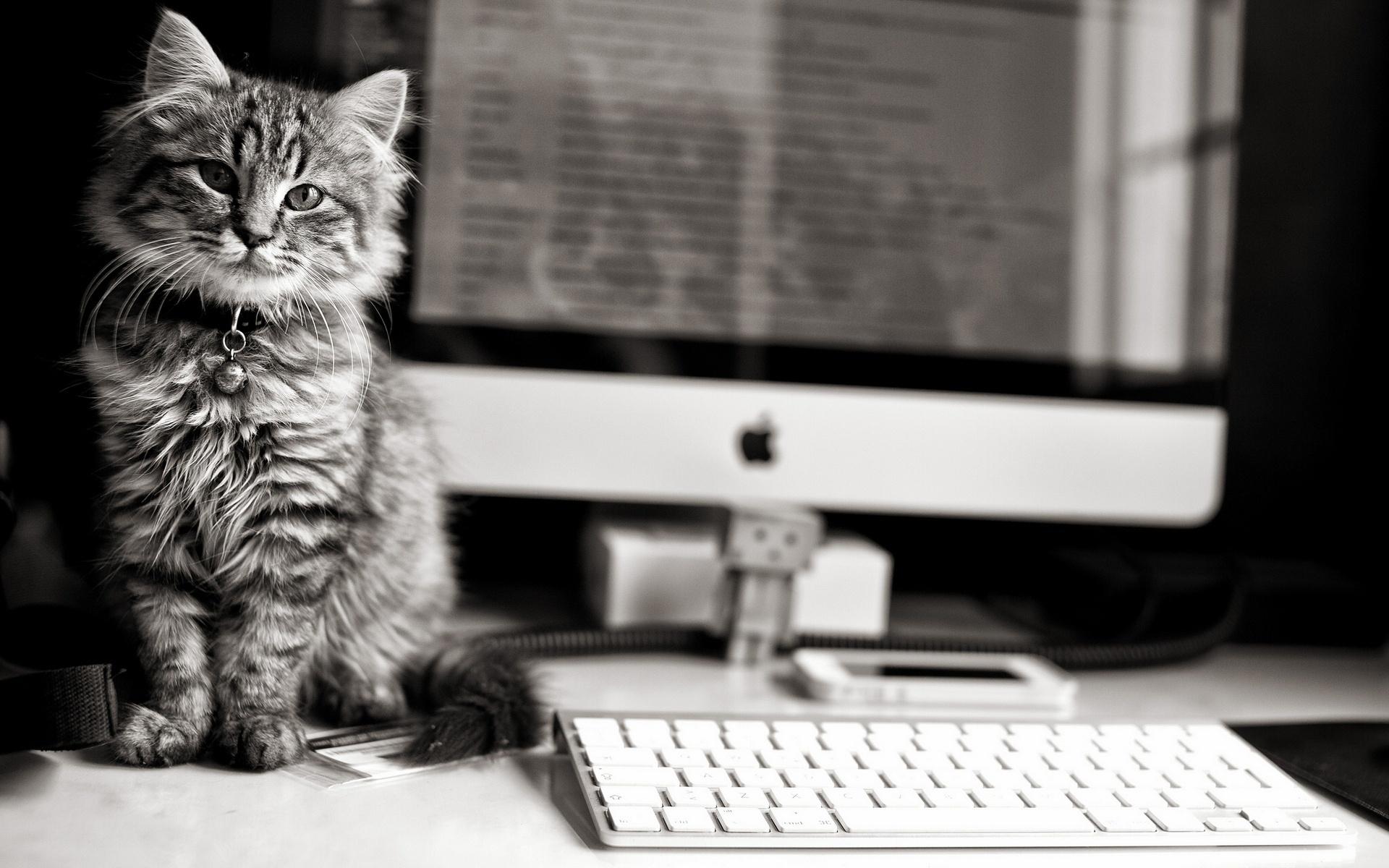 Cute cat grayscale