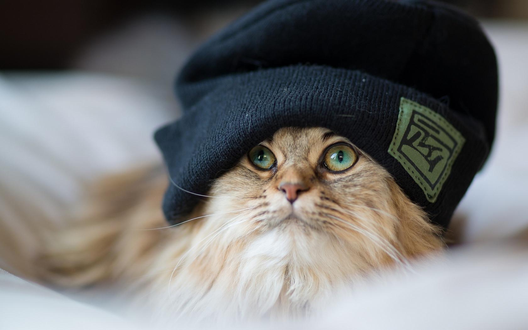 Cute Cat Headdress Wallpaper 44549