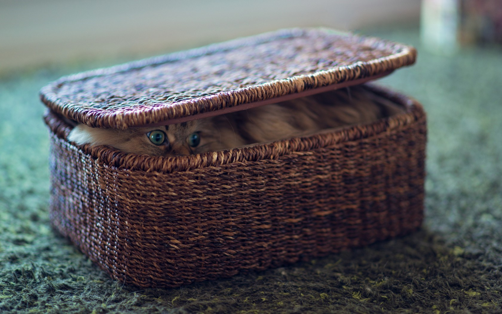 Cat Hide Basket