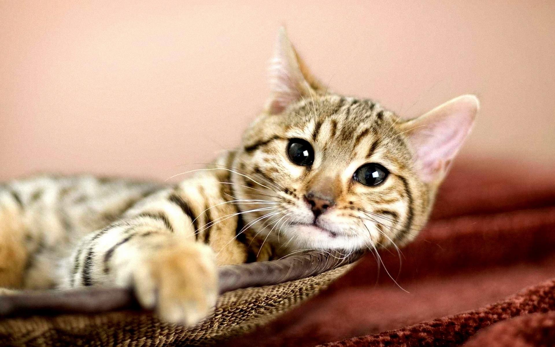 Cats In Basket Wallpaper Cat in a basket