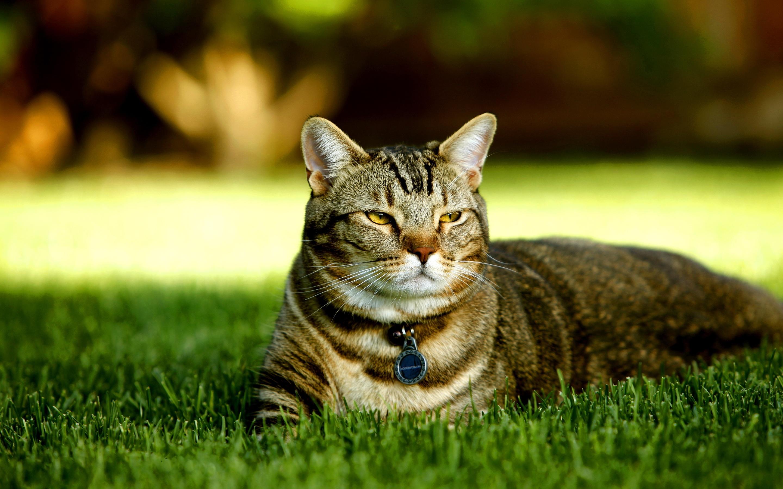Cat in lawn