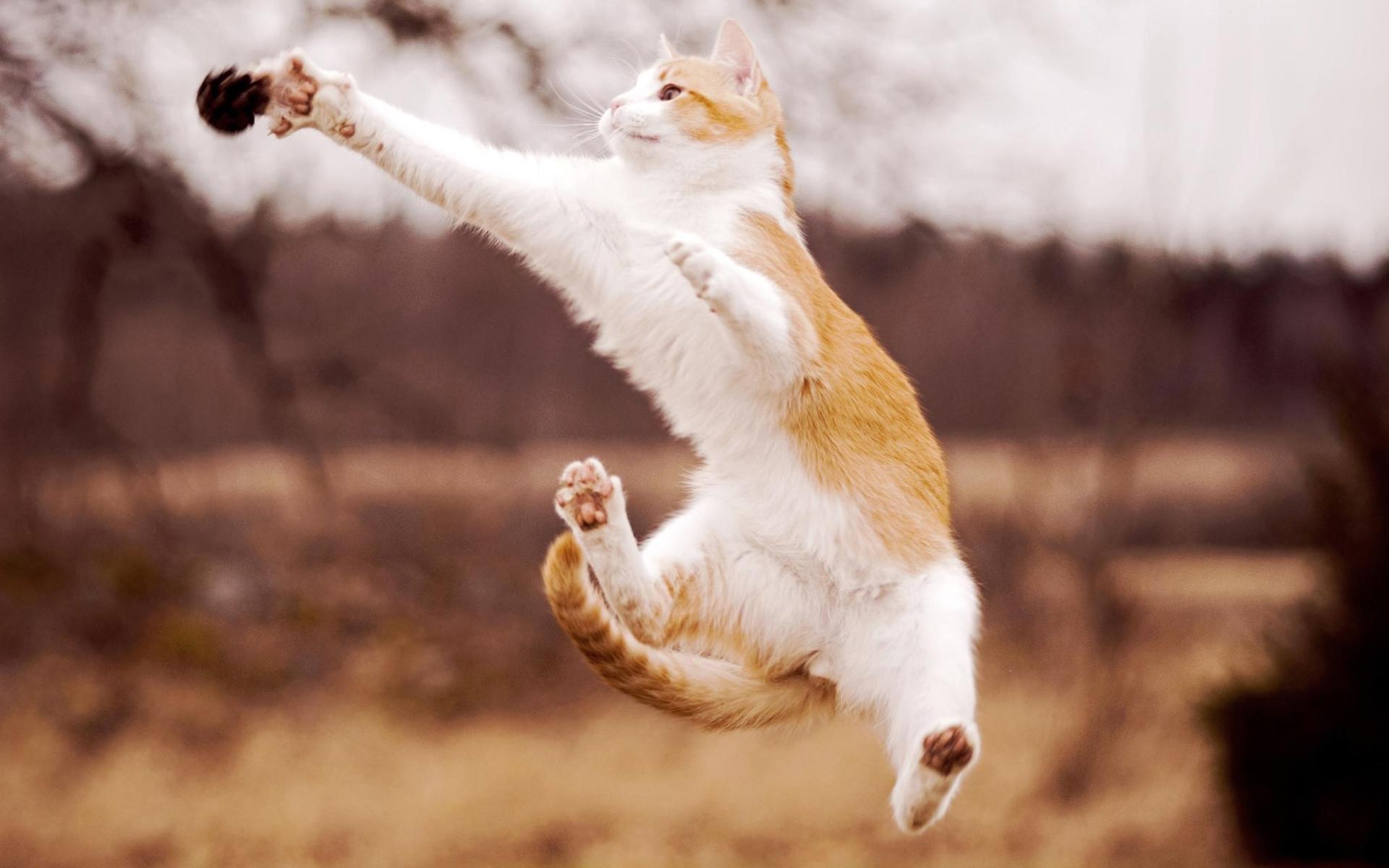 Cat jump catch