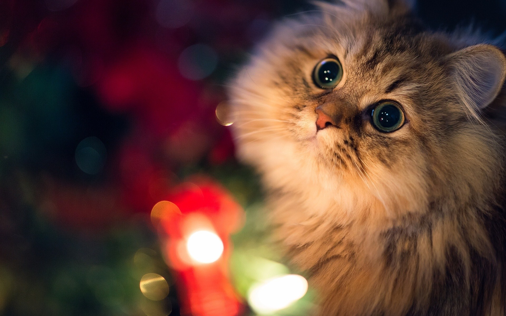 Close-Up Cat Lights Photo HD Wallpaper