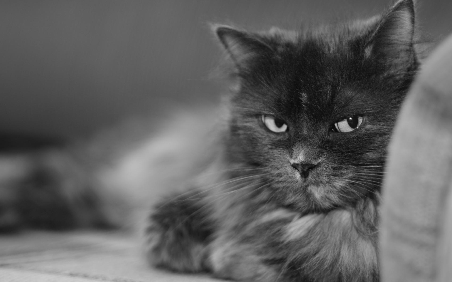Cat nasty look