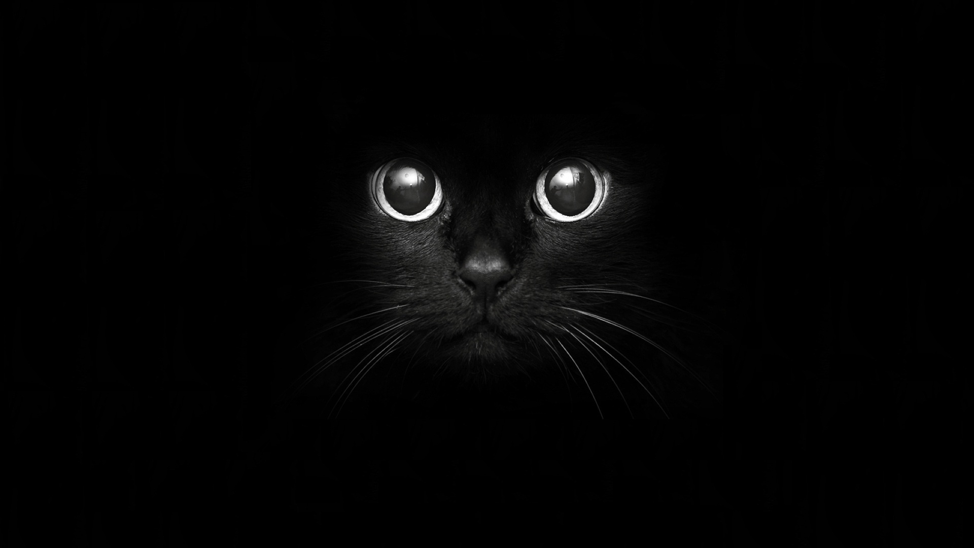 cat picture 1920x1080 with tagme breed solo whiskers highres black hair black nose large pupils wide