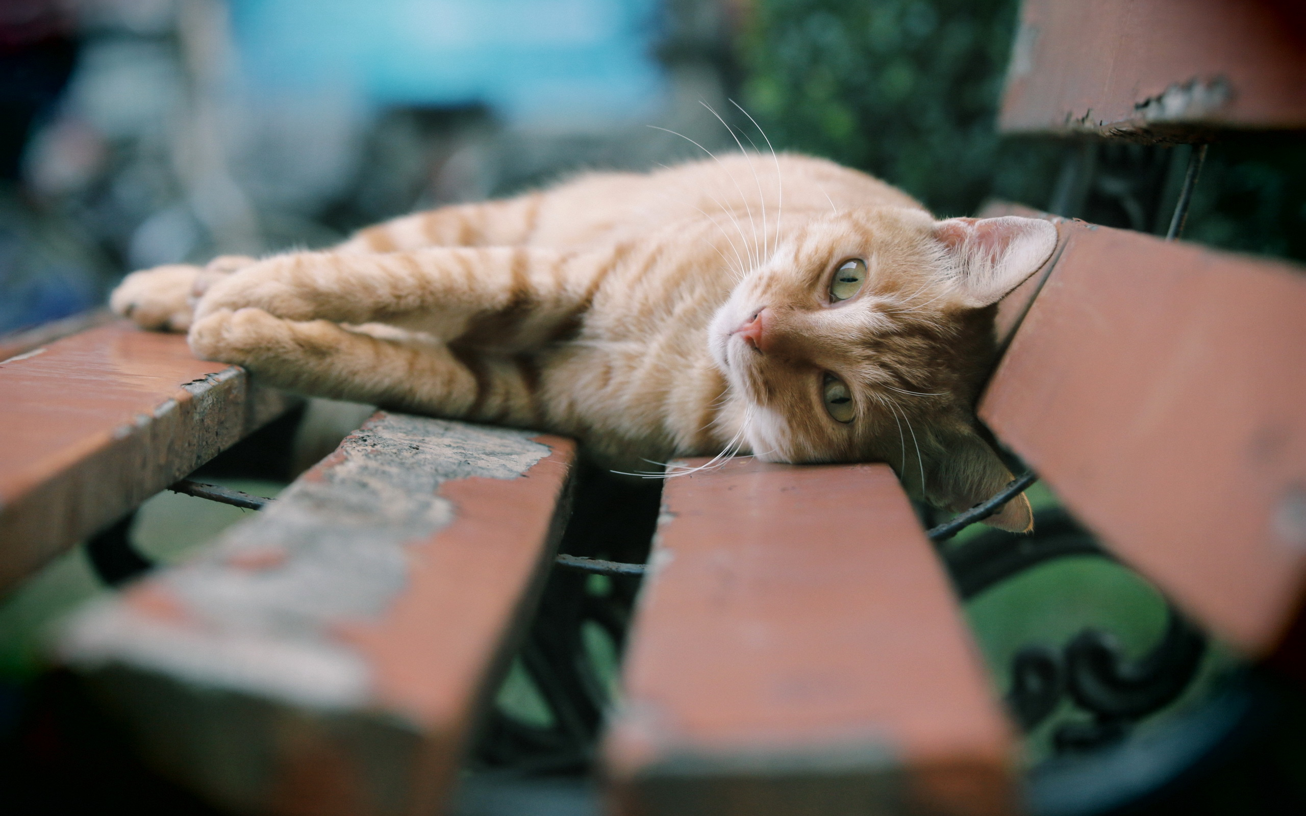 Cat park bench