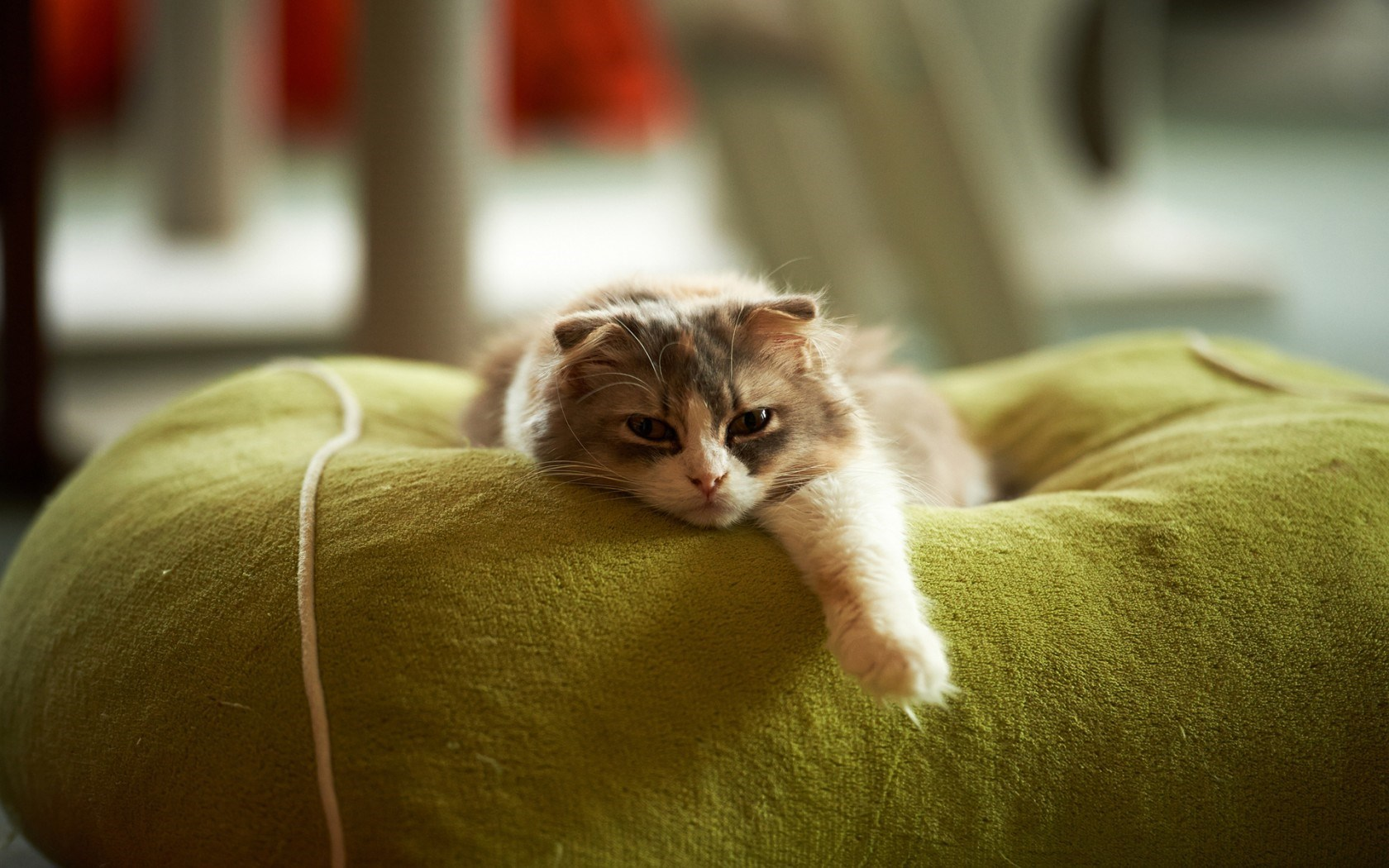 Bed Cat Rest