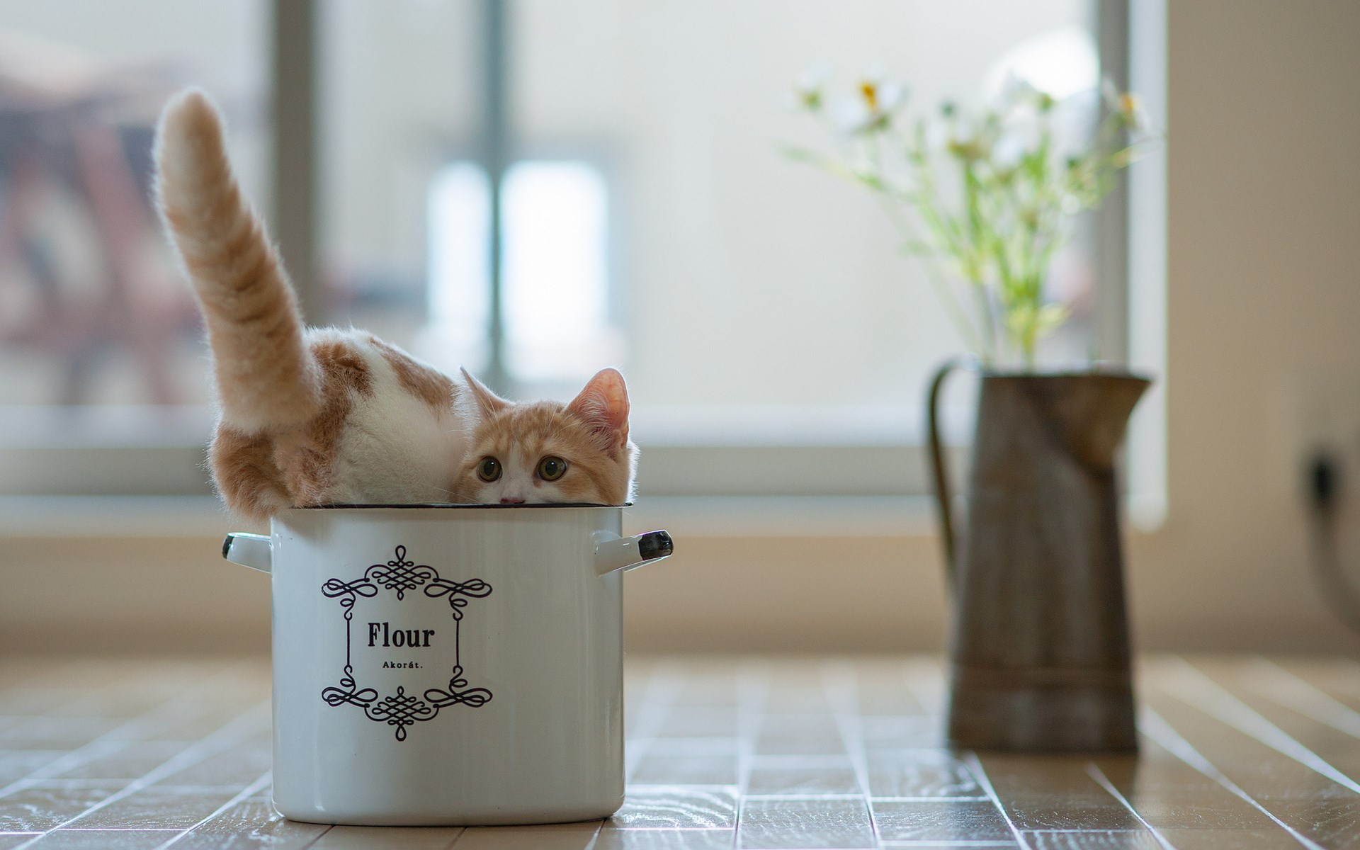 Cat Saucepan Vase Flowers