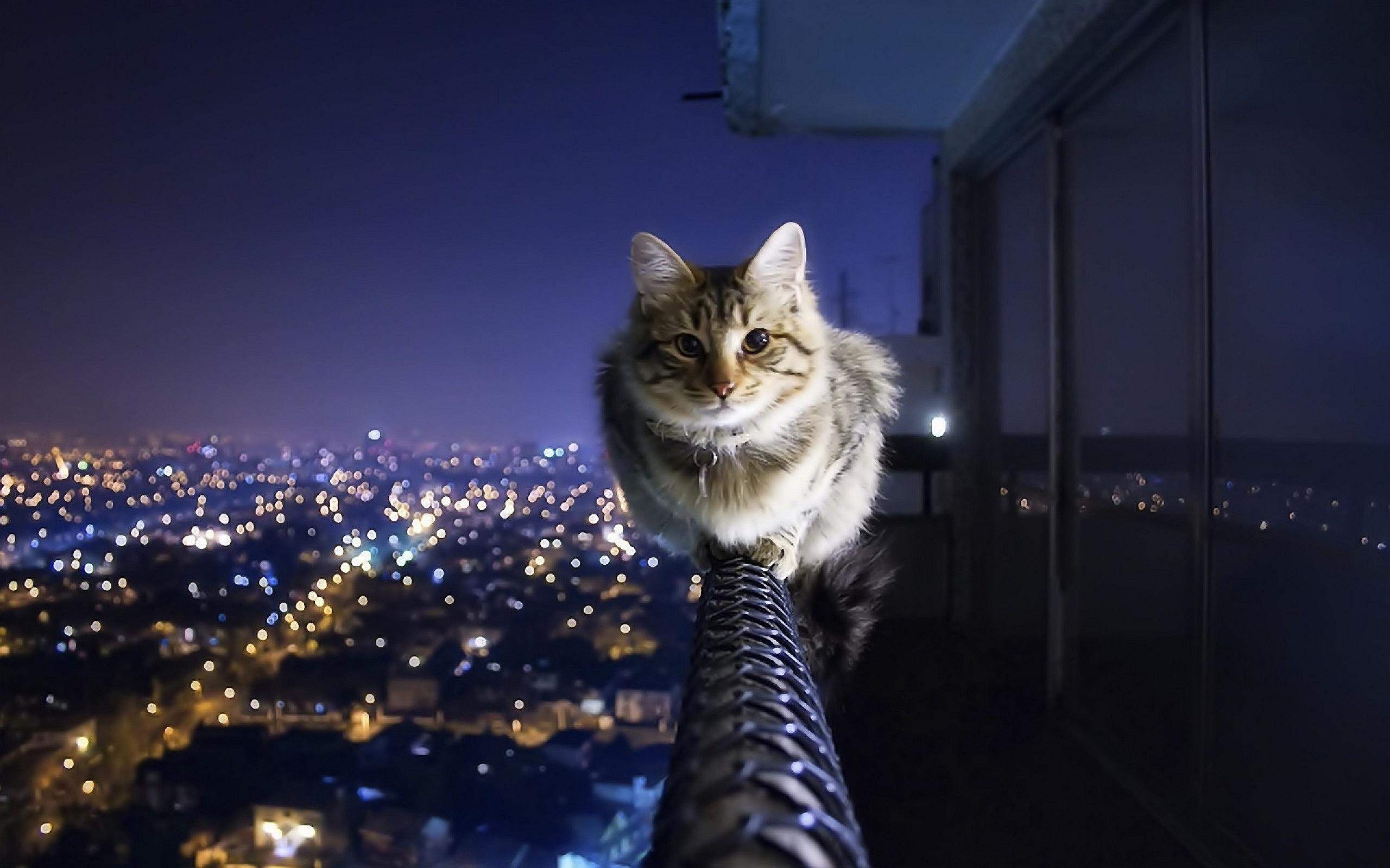 Cat Sitting Banister