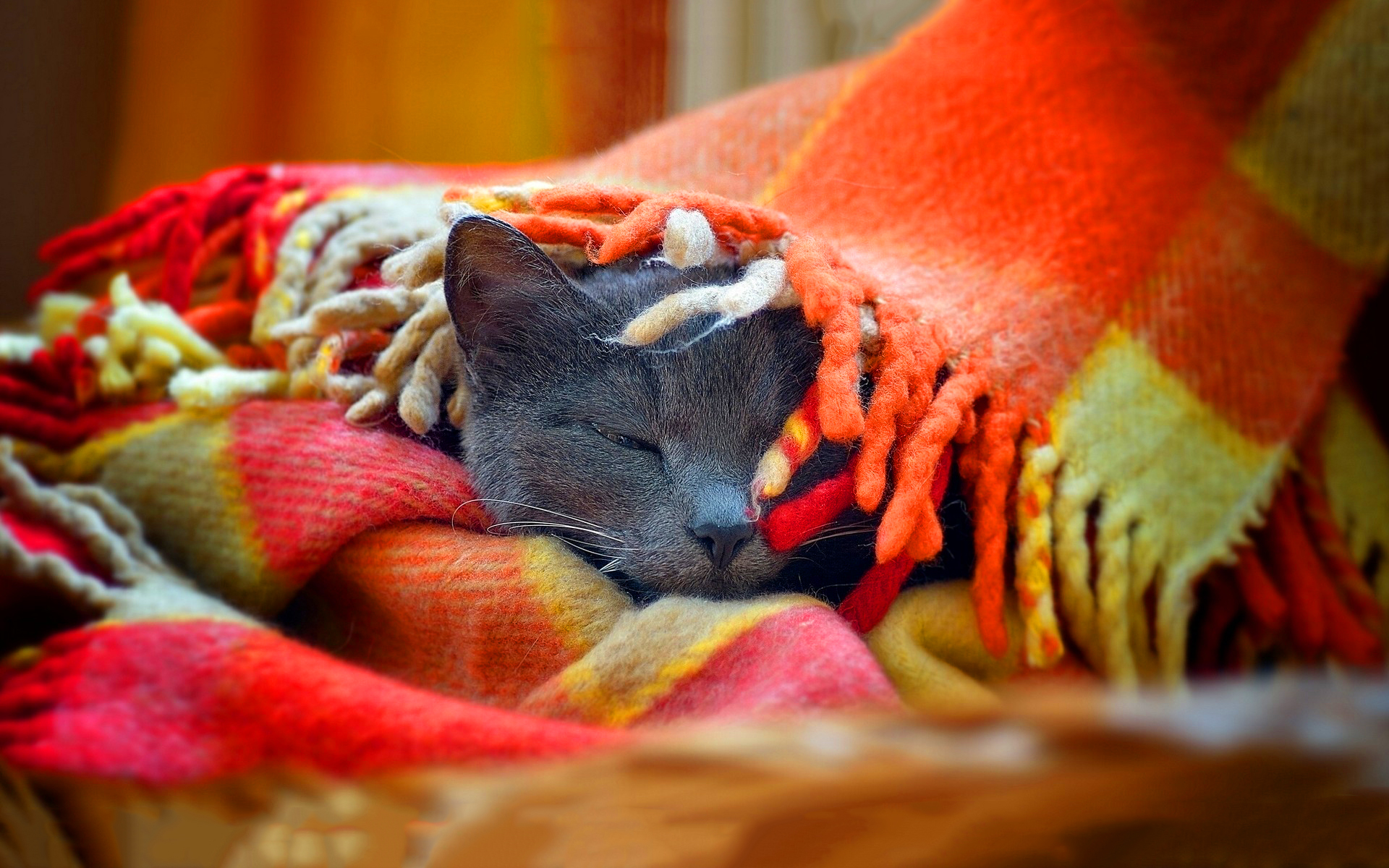 Cat sleep blanket
