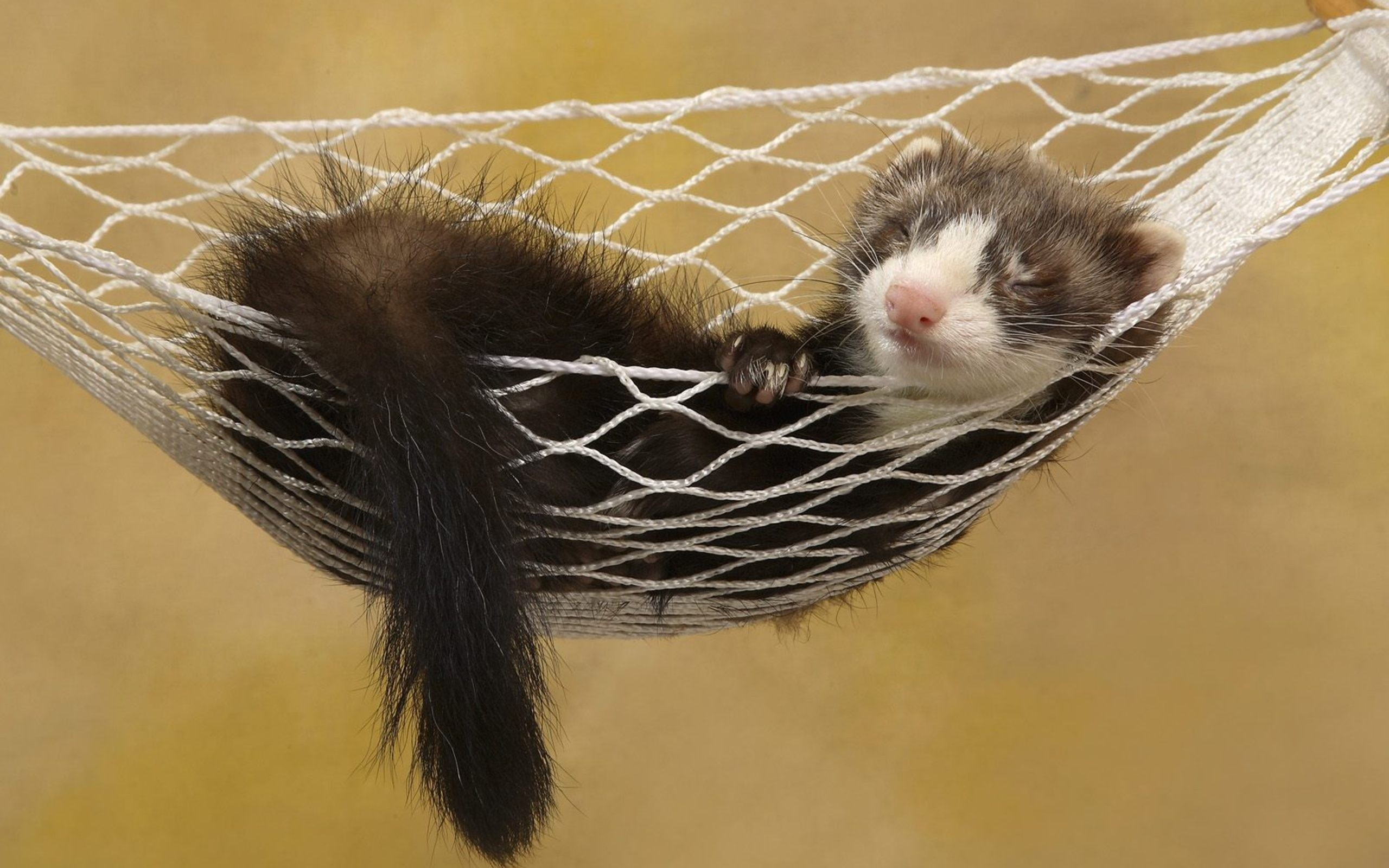Ferret Sleep Hammock