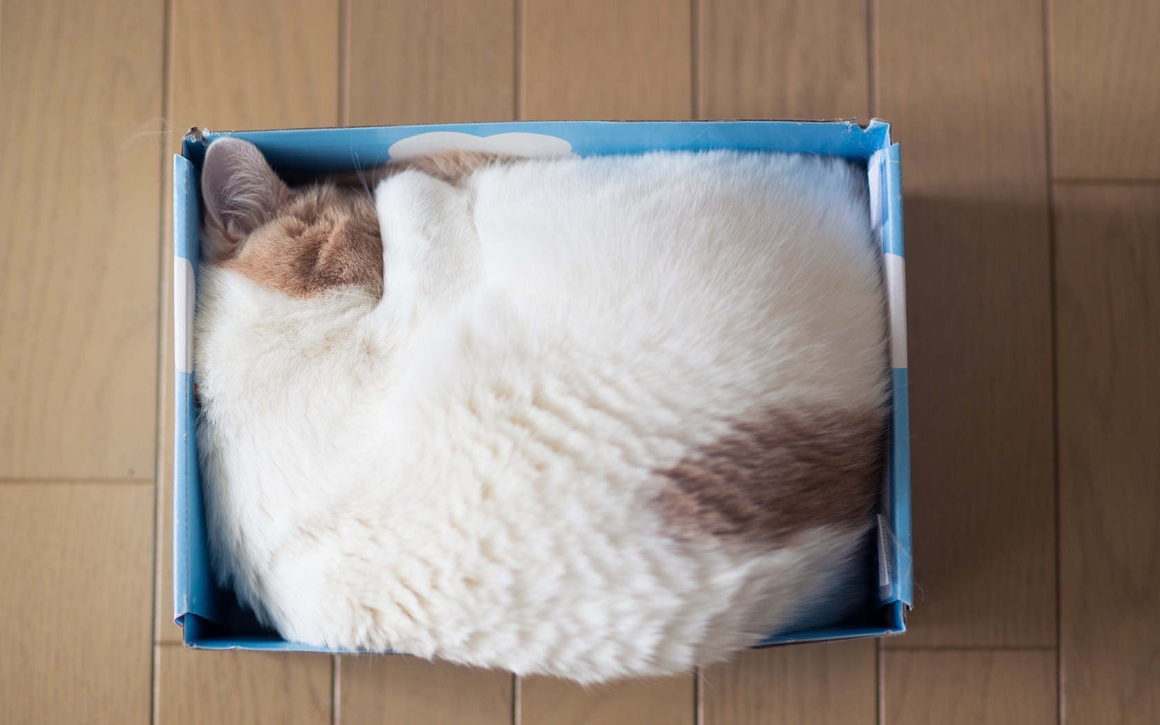 Cat Sleeping Box