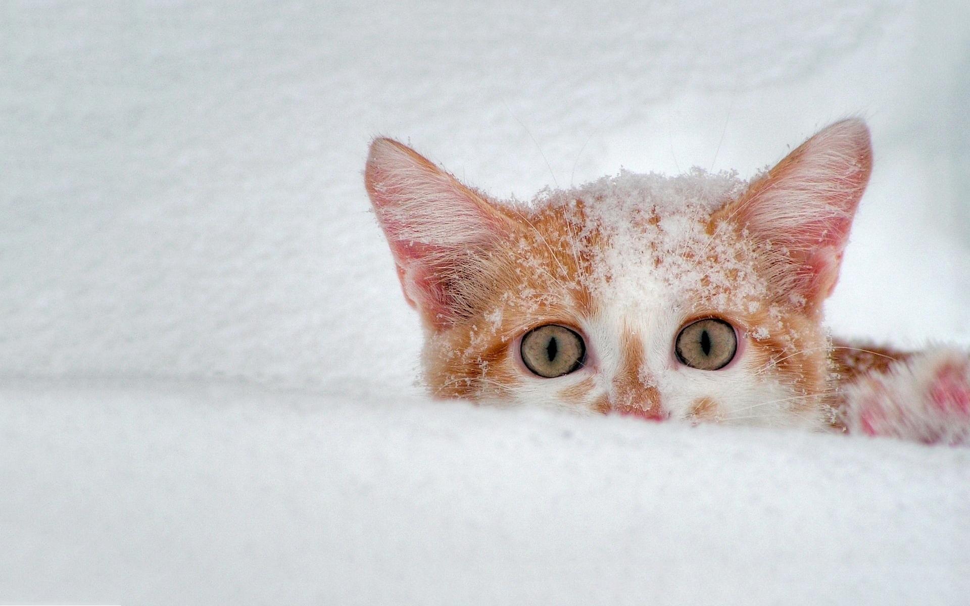 Cat Snow Scary
