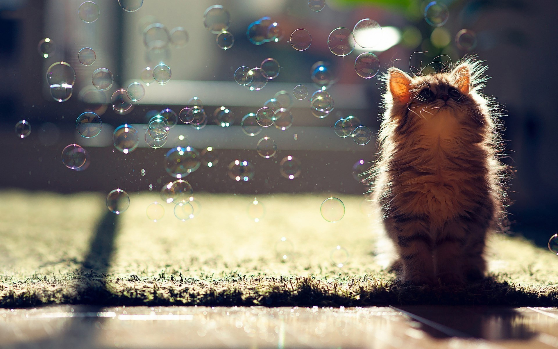 Cat soap bubbles