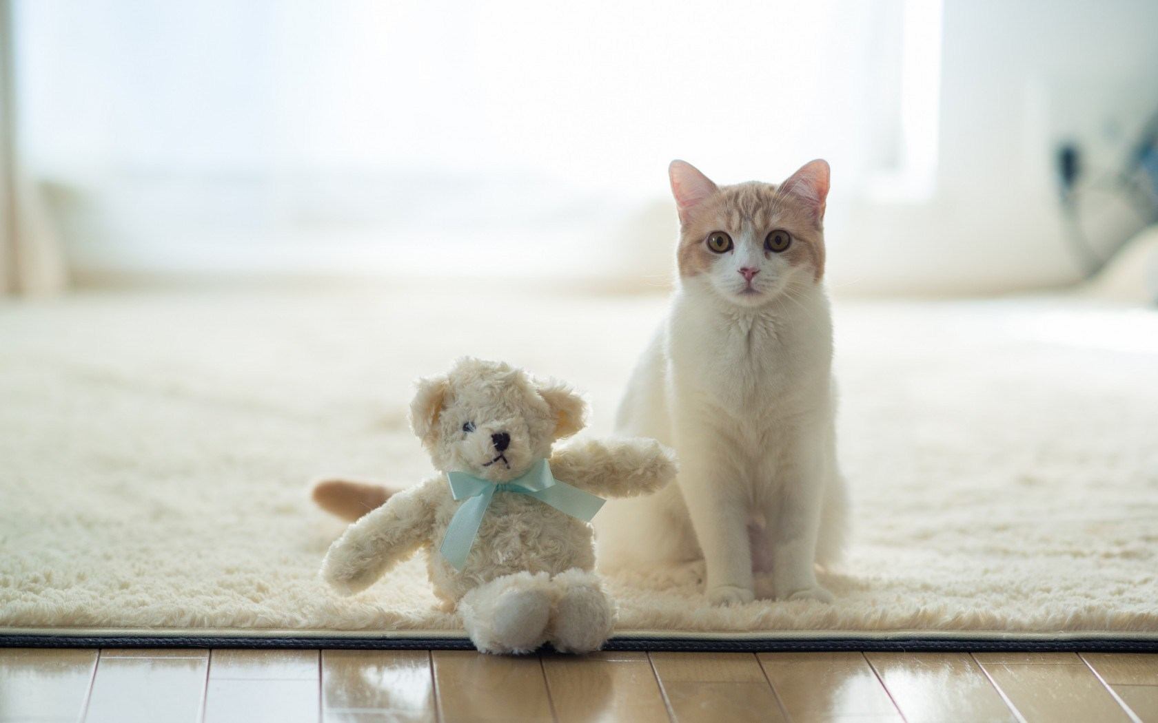Cat Toy Bear