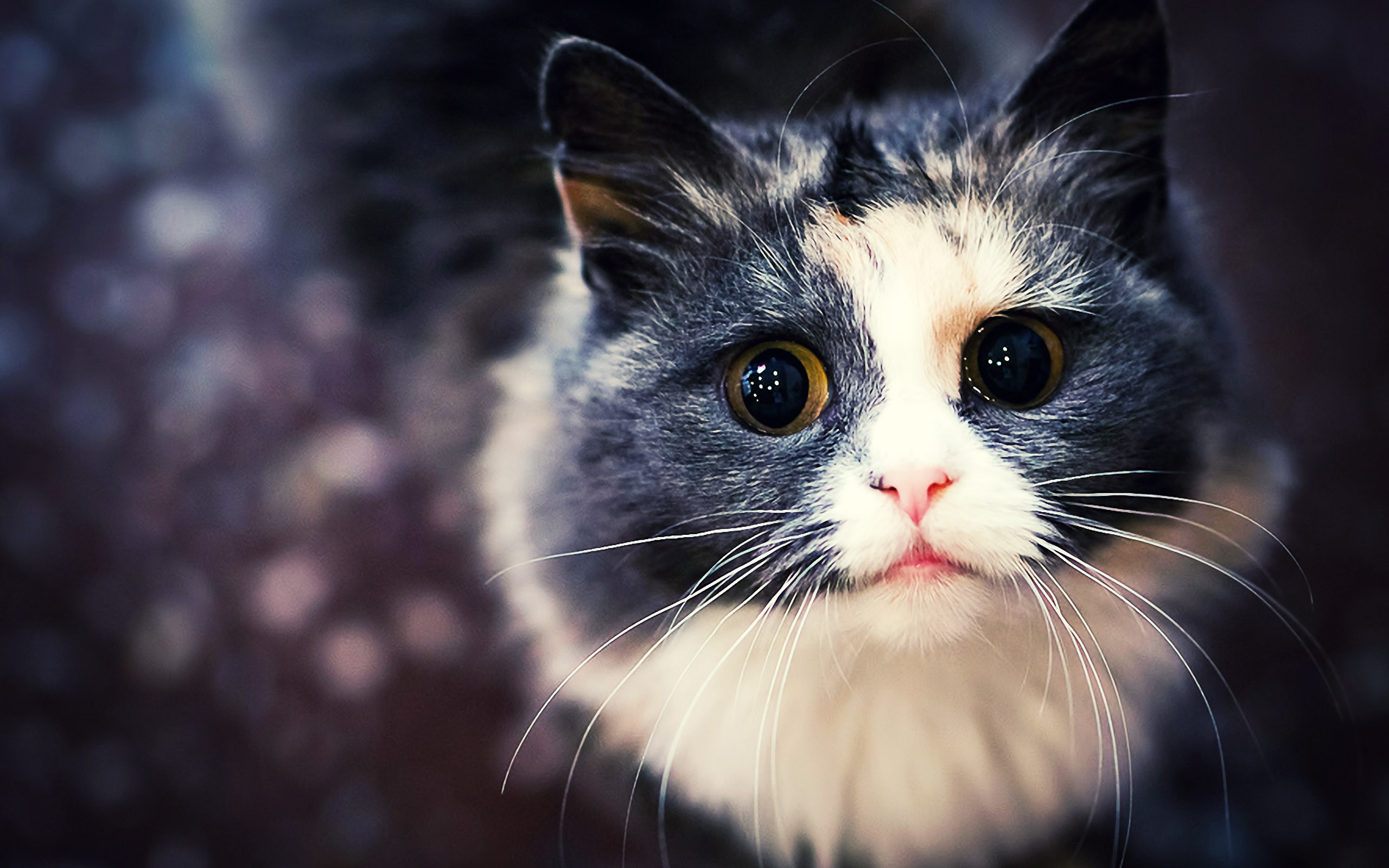 cat-wallpaper-04.jpg ...