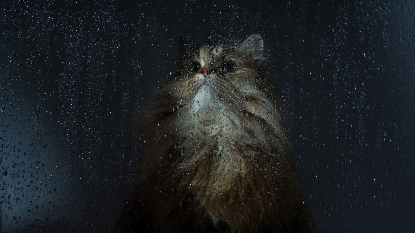 Cat wet window Wallpaper in 1600x900 HD Resolutions